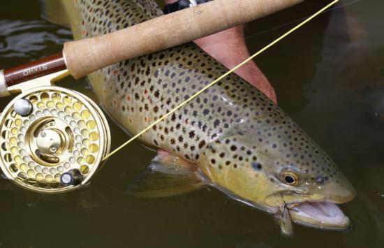 Wildlife for Warriors - Spruce Creek Classic
